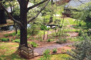 A view of the garden from above