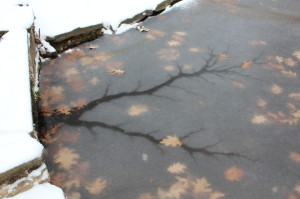 Ice on the fishpond, Randolph College Botanic Garden, January 2013. By Sara Graul and Eli Shadrach.